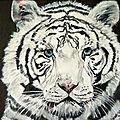 Le tigre blanc - Huile 22 x 16 - 4 décembre 2008