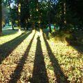 Effet d'ombres au parc des Réaux Soisy sur Ecole (Essonne)