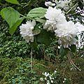 fleurs2 003