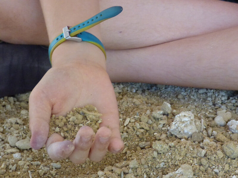 13 Muséum Chantier de fouilles (19)