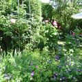 Un petit coin de mon jardin