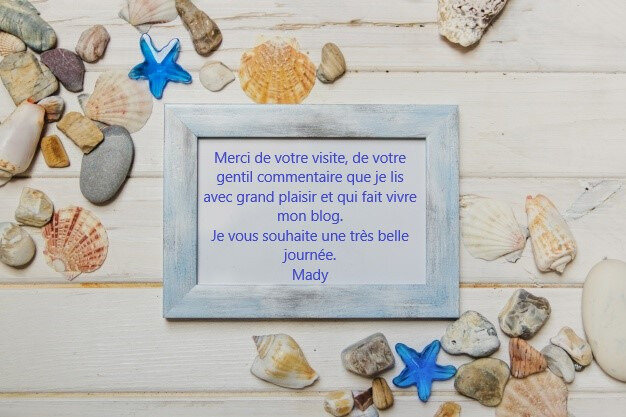 composition-ete-coquillages-cadre-vierge_23-2147632702