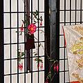 Délicat ikebana