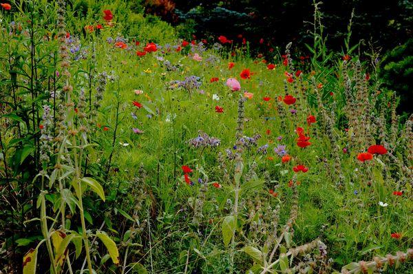 Fleurs du Botanique 075