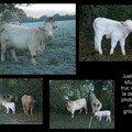 Oh la vache!!!