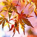 L'automne n'est pas loin
