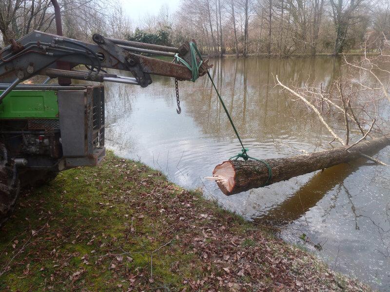 14mars-abattage arbres (48)