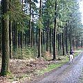 Balade à cheval dans la forêt P1080254