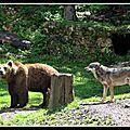l'ours et le loup