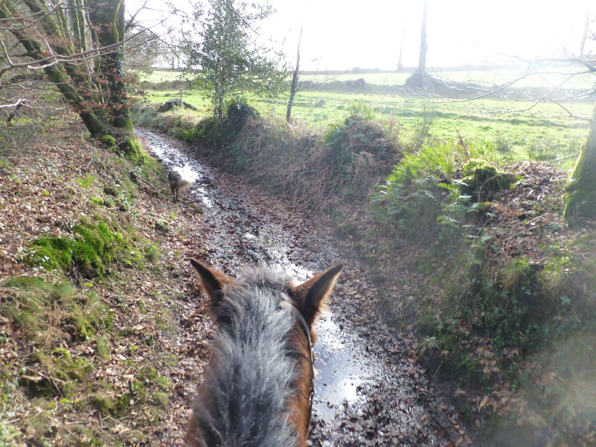 Balade à cheval dans la forêt P1080262