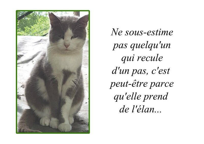 CITATION NE SOUS ESTIME