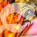 La foire pollen 2013 à blanzat, c'est ce week-end