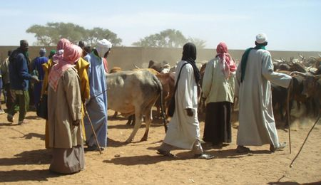 jauger les bêtes FATOMA Mali