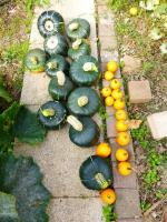 3-courges buttercup (1)