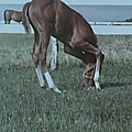 Song of the horse (uma no uta) (1971) d'akira kurosawa