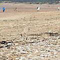 Piaf à la plage .....