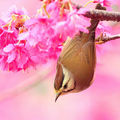 1270086134_1600x1200_beautiful_bird_in_spring