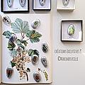 cabinet de curiosités- galets d'entomologie 1 ©création Marimerveille