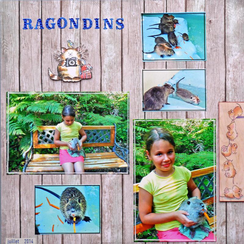 ragondins
