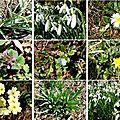 fleurs printemps