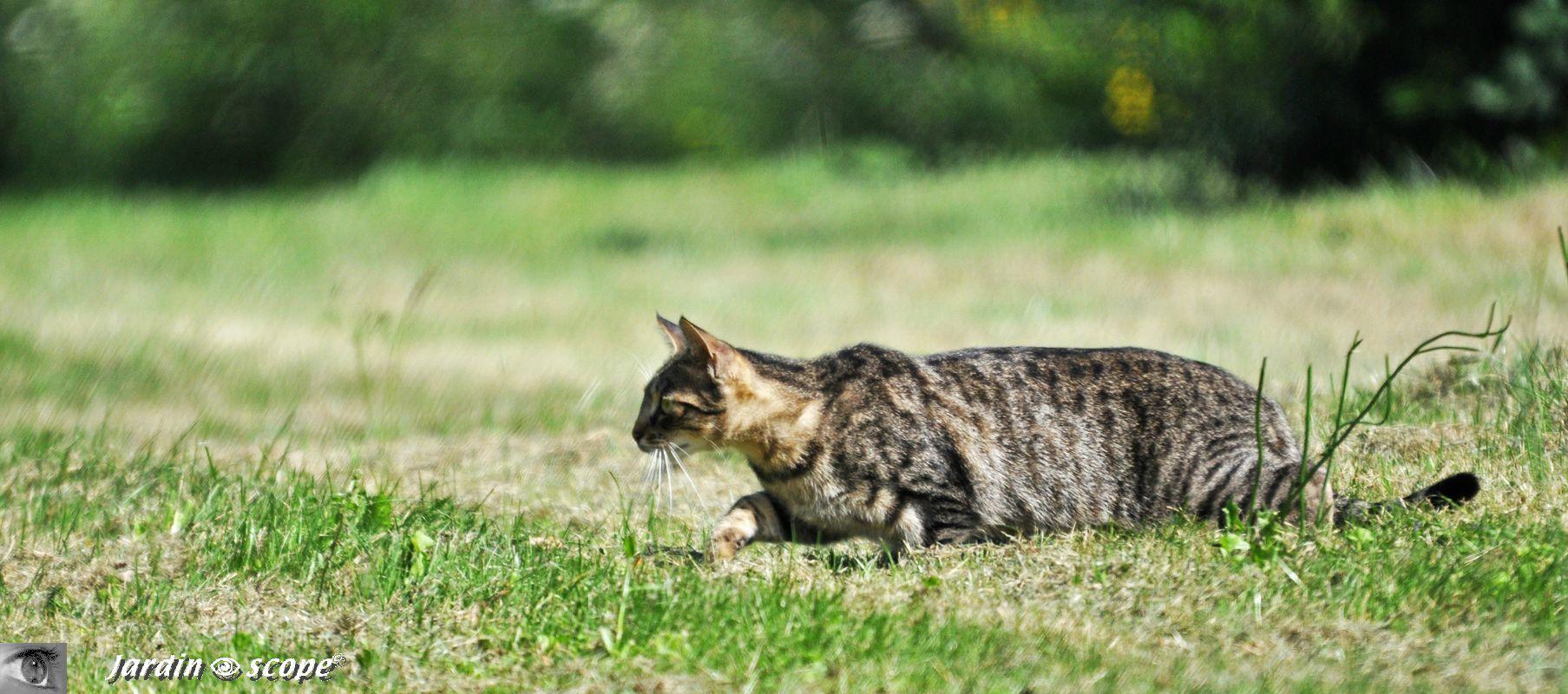 Les chats, ces redoutables prédateurs règnent au jardin