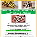 2ème campagne de la culture de l'haricot
