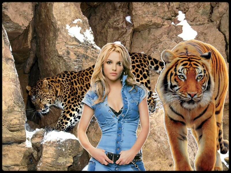 tigre et panthere