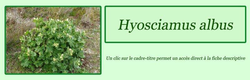 Hyosciamus albus