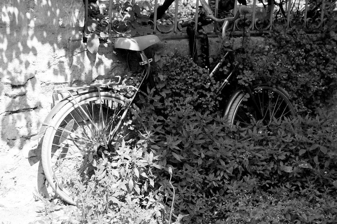 vélo feuillu_4304