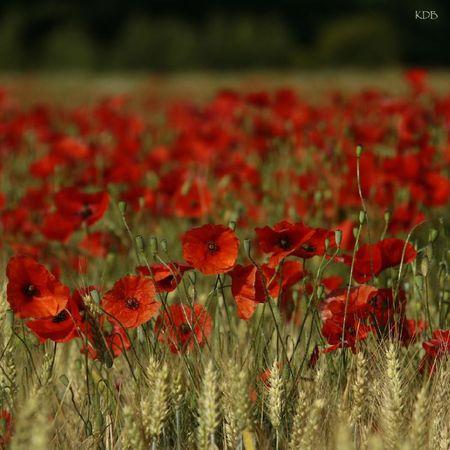 blog carre rouge 3