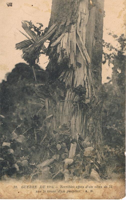 1914-effets d'un obus sur un peuplier