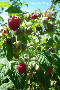 Crumble fruits rouges6