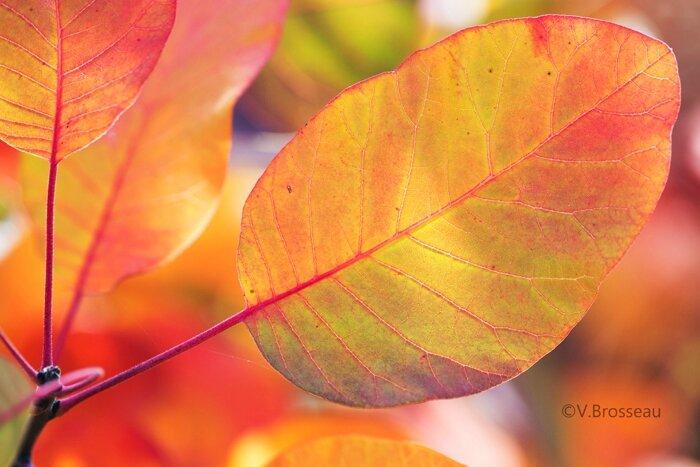 feuilles-automne15-32