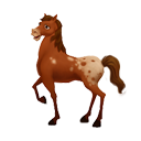icon_adult_horse_appaloosa-2f8b7c95ce562cfaed3bd1f4dd70f378