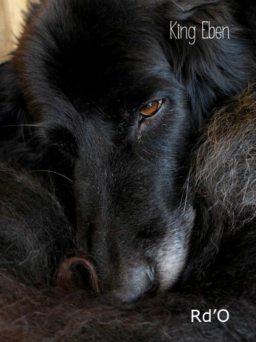 animaux-home-blog-05