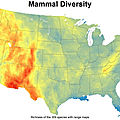 Mammal Diversity in the United States