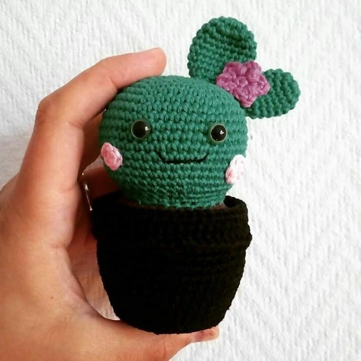2 - Cactus en pot