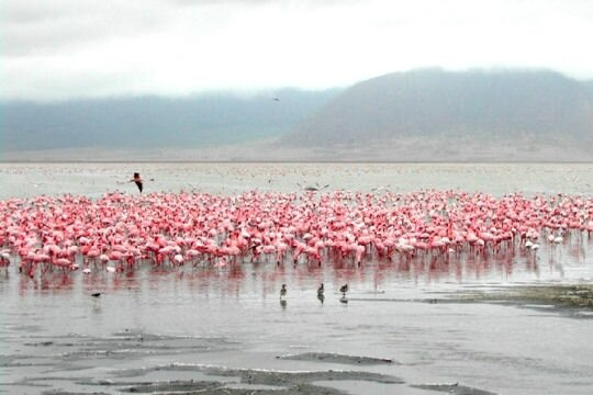 flamants-roses-405097