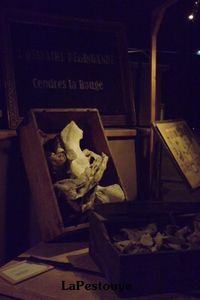 les exentriques chato9 septembre 2011 069 (Copier)