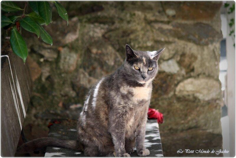 Chat sur le banc
