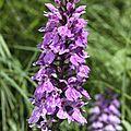 Sentier botanique des orchidées