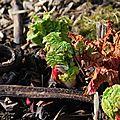 Fleur au jardin 26 02 2012 003 copie