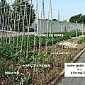 Notre jardin potager 2011