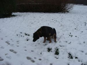 Neige à Ecault 020