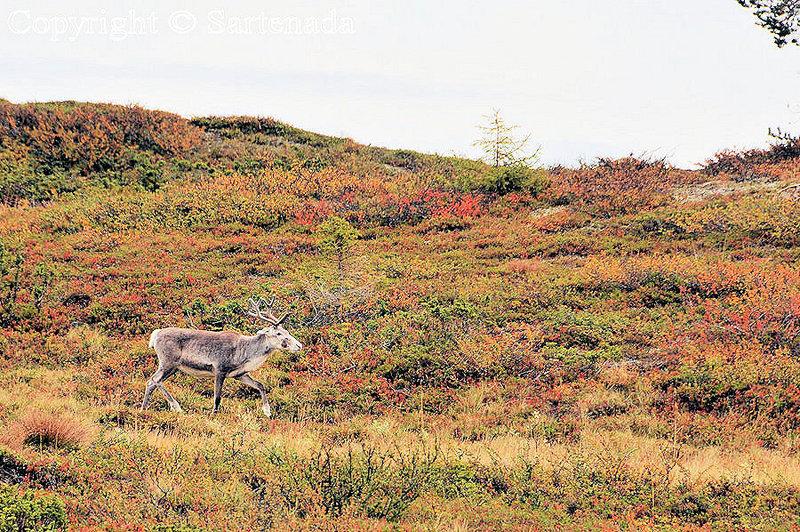 Pallas_Fell_Lapland_ (12)