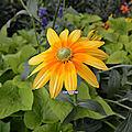 18/08/19 : fleurs de l'été
