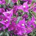 Une jolie fleur...