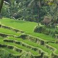 Bali lolo 2008 305