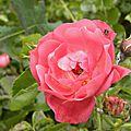 nature-et-jardin (4)