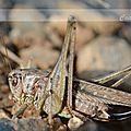Compressé Insecte 343